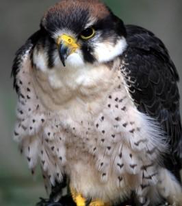Poruchy správania a skupina vtáčích liekov v homeopatii