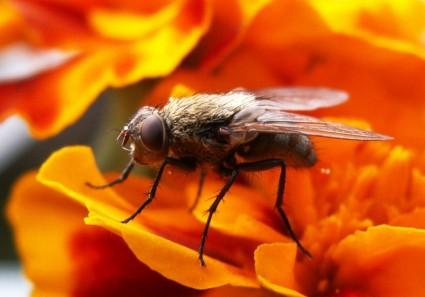 Mucha a komár - jedna z tém seminára Dr. J. Hardyho