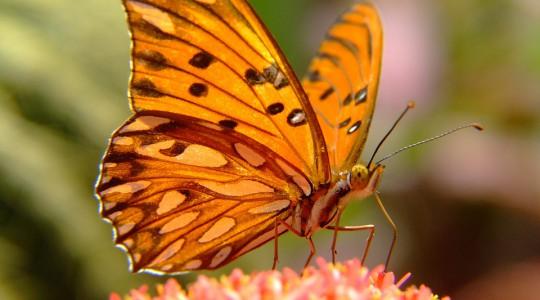 Motýle ako symbol slobody, transformácie a krásy