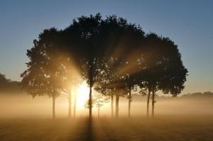 Východ slnka v pozadí stromov