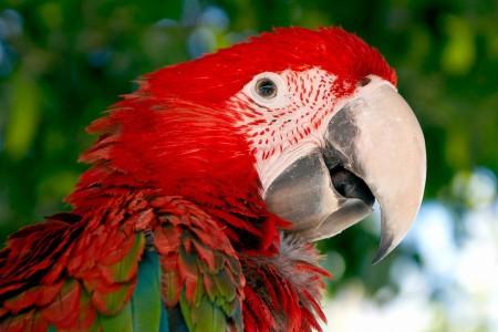 Prípad Macaw z praxe Douglasa Browna - 2. časť