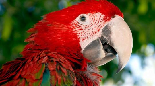 Prípad Macaw z praxe Douglasa Browna - 2.časť