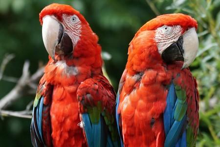 Prípad Macaw z praxe Douglasa Browna