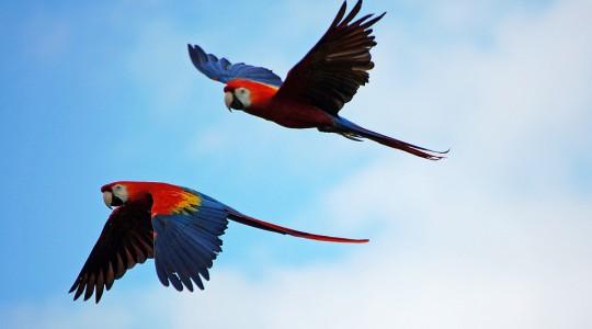 Prípad Macaw z praxe Douglasa Browna - 3.časť