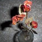 Meď, ruža
