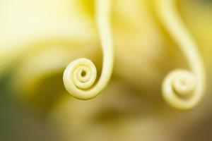 Špirála rastliny