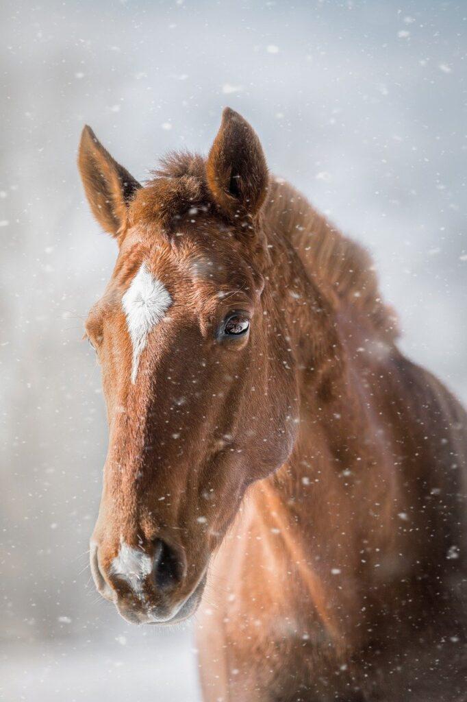 kôň, lac equinum