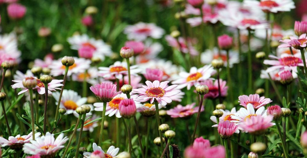 Meadow-flowers-Michal-Yakir